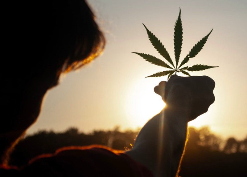 Exclusive: Mexico one step closer to legalize recreational marijuana use