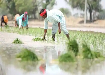 Centre approves hike in MSP for kharif crops for 2021-22 amid farm stir
