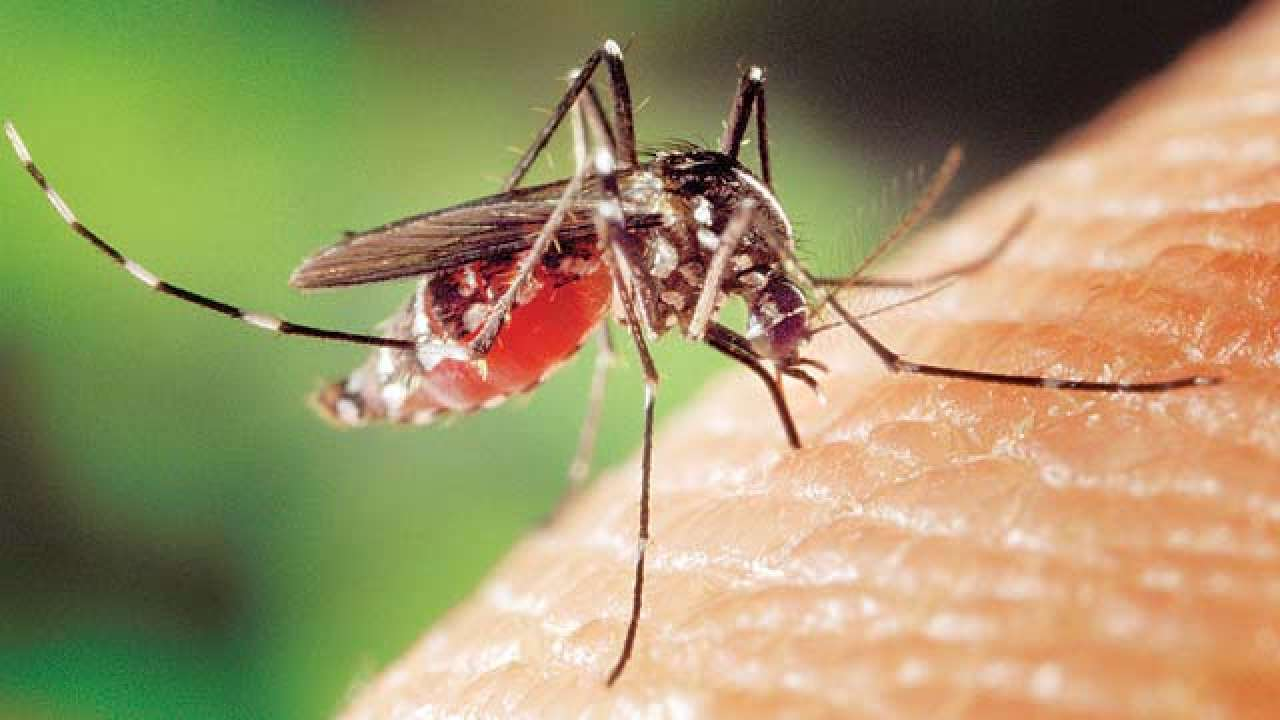 Serotype-II dengue outbreak in 11 states, Govt recommends steps to control it