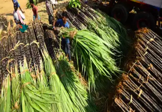 Now Bio products will be produced on a large scale at Seorahi and Muzaffarnagar: UP Sugarcane Research Council
